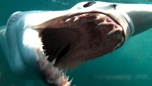 GoLocalProv   RI SHARK WEEK: Local Shark Attacks