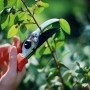Now's the time to get out and prune those spring-flowering trees and shrubs. What else should you be doing for your yard this season?