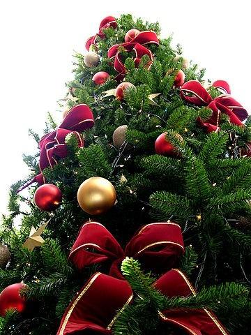GoLocalProv Rep Morgan Teachers Should Be Able To Say Merry  - Christmas Trees Ri
