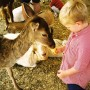 Petting Zoos are fun and safe for children of all ages.