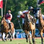 Watch a thrilling polo match, drive a BMW, and eat some lobster at the Newport International Polo Series this weekend.