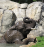 Bring the kids to get down with the elephants at the zoo this weekend.  Photo: Roger Williams Park Zoo