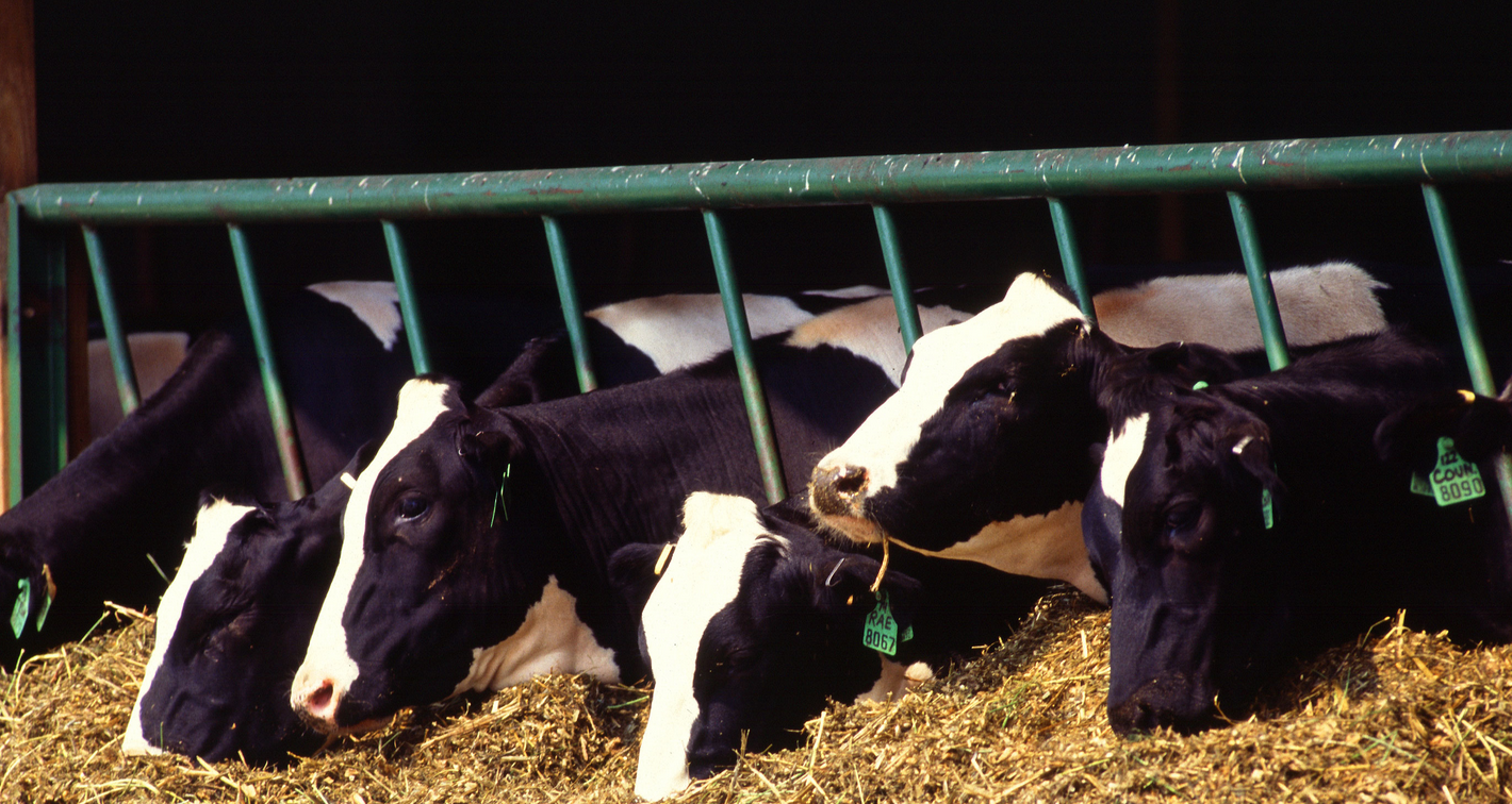 GoLocalProv | Munroe Dairy Named the 2015 Business of the Year