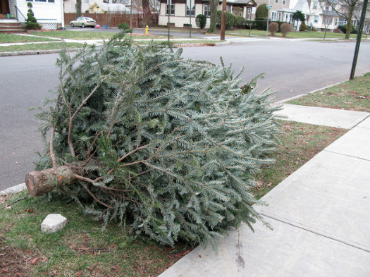 Golocalprov Providence Curbside Pick Up Of Christmas Trees Begins