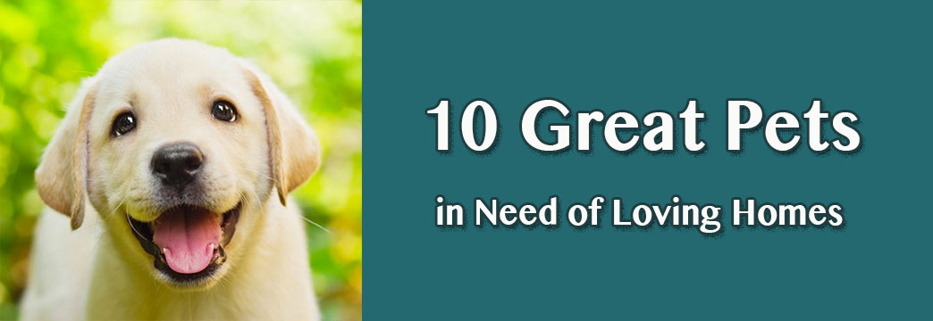 10 Great Pets in Need of Loving Homes—September 3, 2014